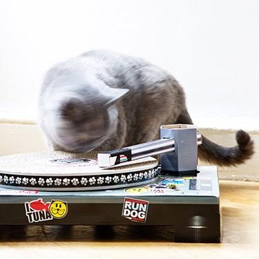 Vintage-Cat-Playhouse-4
