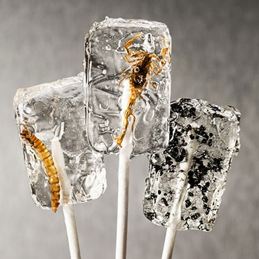 Insect Lollypop